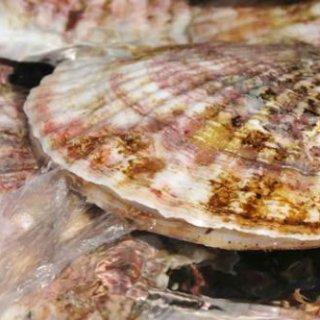 夏の海バーベキューが絶対盛り上がる!海辺にぴったりな美味しいグルメ食材