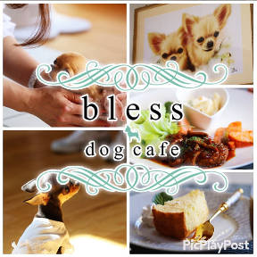 bless dog cafe