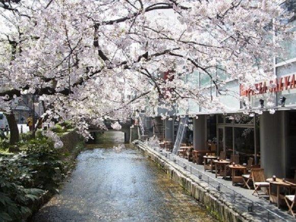 京都の桜スポットでお花見ランチ!使えること間違いなしの5軒の記事で紹介されました
